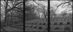 Rest (argentography) Tags: olympuspen cemetery film tree peoria asylum bartonville illinois panorama penorama