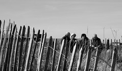 Beach day (marionmcmurdo) Tags: beach fence dunes people candid blackandwhite standrews fife scotland canoneos760d