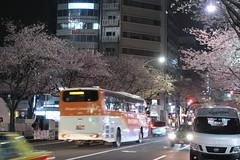IMG_0536 (digitalbear) Tags: canon powershot g9x markii mark2 nakano dori sakura cherry blossom blooming fullbloom tokyo japan yozakura hanami