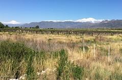 classic view of Mendoza (galsafrafoto) Tags: argentina mendoza andes grapes landscape nature