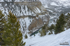 Basalt Canyon Wall (kevin-palmer) Tags: yellowstone nationalpark yellowstonenationalpark wyoming winter february nikond750 tamron2470mmf28 yellowstoneriver flowing water cold snow canyon steep cliff basalt trees