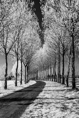 Sun Lit, Infra Red (paulnorris2011) Tags: nikon d70 infra red ir mono chrome bw black white east kent rural farm fields trees sunlight crop road lr leaves wheat
