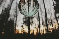 Sun backdrop in forest (tpaddison1) Tags: trees forest sun softfocus crystalball