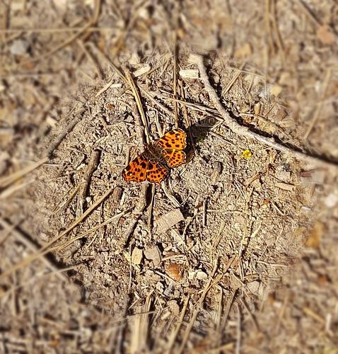 Wegbegleiter - Schmetterling