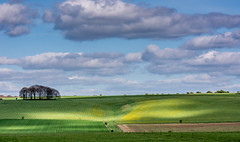 North Wessex Downs (Peter Quinn1) Tags: northwessexdowns averbury frmland agriculture lightandshadow fields copse cloudscape spring