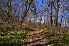 Greening forest (МирославСтаменов) Tags: russia moscowregion path forest tree greenery shadow spring sky