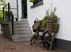 Old bike in bloom :) ((( n a t y ))) Tags: bike zutphen netherlands gelderland paisesbajos fiets old city urban street architecture flowers spring lente straat bloemen lavander broken artistic decoration beautiful stairs house outdoor fortress bloom sidewalk bricks basket country life countryliving canon travel traveller wanderlust blossom depthoffield holiday