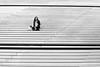 Quatrième arrondissement (elisverlander) Tags: france paris woman line neighbourhood outdoor stair naturallight blackandwhite elisverlander