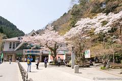 Mt Takao (takashi_matsumura) Tags: mt takao hachioji tokyo japan sigma 1750mm f28 ex dc os hsm nikon d5300 ngc cherry blossoms sakura spring