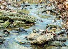 20170330-untitled shoot-3731.jpg (jgillmissouri) Tags: pond 3stop oakhollow 2017 landscape march nikond810 jack