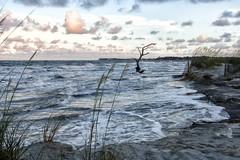 Beach Landscape - Hunting Island S.C.