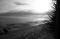 151227IMGP7755 (aureliedumartin) Tags: borddemer villages de pêcheurs cap ferret noir et blanc seaside