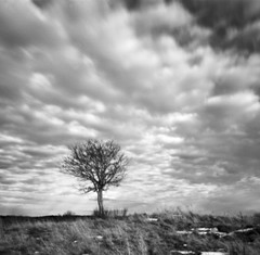 Tree (Tony Bokeh Larsson) Tags: agfaisola1 pinhole 6x6 kodakhc110 fujiacross100 film vintage clouds outside 120film monochrome blackwhite sweden uppsala