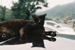 cnv000024 (雅布 重) Tags: nikon f100 nikkor 50mm f14d rossmann100 film cat 2017 taiwan 貓