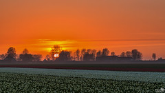 Tulips at Sunset (BraCom (Bram)) Tags: bracom tulips sun zon sunset zonsondergang tulpen trees bomen farm boerderij silhouettes field akker silhouetten mist fog evening avond cloud sky season seizoen spring lente voorjaar agriculture dirksland goereeoverflakkee zuidholland nederland southholland netherlands holland canoneos5dmkiii widescreen canon 169 canonef24105mm bramvanbroekhoven nl
