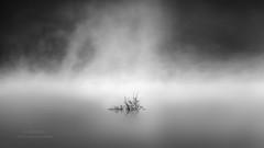 El pantano 3 (Mariano Belmar Torrecilla) Tags: otoñoalbaceteagua niebla bw blancoynegro minimalism