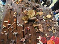 IMG_0251 (natalie.jing.ma) Tags: australia newsouthwales stateforest foraging mushroom