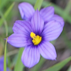 D176050S (RobHelfman) Tags: losangeles flowers kennethhahnstaterecreationarea