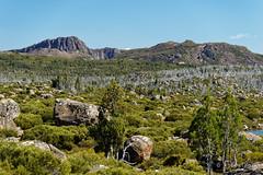 20170301-31-Light alpine scrub (Roger T Wong) Tags: australia greatpinetier mtjerusalem np nationalpark sel70300g solomonsthrone sony70300 sonya7ii sonyalpha7ii sonyfe70300mmf2556goss sonyilce7m2 tasmania wha wallsofjerusalem worldheritagearea bushwalk camp hike trektramp walk
