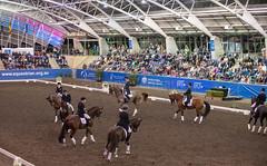 17429_Sydney_CDI_Quadrilles_0043.jpg (FranzVenhaus) Tags: athletes dressage australia equestrian riders horses ponies rug siec nsw sydney newsouthwales aus