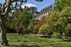 2017 Nizzapark in Frankfurt (mercatormovens) Tags: frankfurt city stadt nizzaufer nizzapark park bäume wiese mainufer platanen