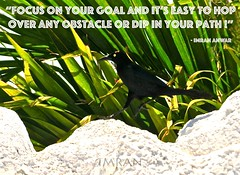 Focus On Your Goal And It's Easy To Hop Over Any Obstacle & Dip In Your Path - IMRAN™ (ImranAnwar) Tags: greatness achievement challenge entrepreneurship entrepreneur bird blackbird d300 florida guidance imran imrananwar inspiration lifecoach lifelessons nature nikon palmtrees quotation quote tampabay