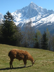 les houches (fionadodsworth) Tags: leshouches parcdemerlet