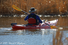 Morning Paddle (dcstep) Tags: n7a4199dxo englewood colorado unitedstates us canon5dmkiv ef500mmf4lisii ef14xtciii cherrycreekstatepark cherrycreekreservoir allrightsreserved copyright2017davidcstephens dxoopticspro1131 nature urban urbannature lake reservoir kayak red paddle man morning sun sparklingwater copyrightregistered04222017 ecocase14949772801