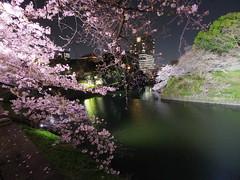 IMGP5654 (digitalbear) Tags: pentax q7 08widezoom 17528mm f374 chidorigafuchi chiyodaku tokyo japan yozakura sakura hanami cherry blossom blooming yurakucho tonkatsu shige tokyointernationalforum kokusai forum