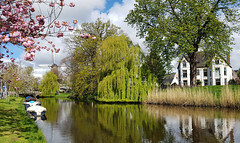 Nieuwlandersingel Alkmaar (Meino NL) Tags: nieuwlandersingel kennemerpark molenvanpiet alkmaar noordholland voorjaar spring northholland singel