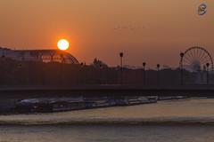 sunrise grand palais (apparencephotos) Tags: paris sunrise grandpalais granderoue