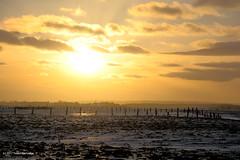 Grand-Pre Sunset (Trevdog67) Tags: grandpre dyke farmland dykeland fence land farm sunset snow field clouds golden yellow novascotia nouvelleecosse nature canada nikon d7100 nikkor 18300mm