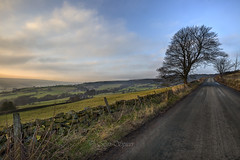 looking forward up the lane,,Explored. (Through Bri`s Lens) Tags: northyorkshire northyorkmoors lane tree road drystonewall brianspicer canon5dmk3 canon1635f4