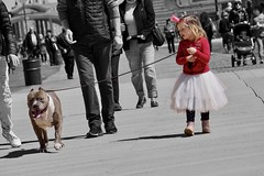 """Tale as old as time Song as old as rhyme Beauty and the beast"" - Celine Dion and Peabo Bryson (Lidiya Nela) Tags: pet dog sonya6000 newyork nyc newyorkcity brooklyn coneyisland friendship unposed candid urban boardwalk street streetphotography partialcolor selectivecolor girl princess pitbull"
