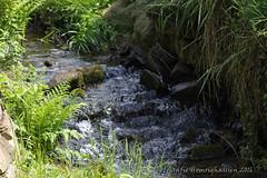IMG_4838 (Fotografie-Homrighausen) Tags: natur ort stein baumstamm siegen wittgenstein landschaft landscape