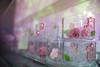 IMG_1099 (Jun.Ohashi) Tags: aquaparkshinagawa aquarium shinagawa アクアパーク品川 品川 水族館 港区 東京都 日本 jp canon キャノン eos eos5dmarkiv eos5dmark4 5dmarkiv 5dmark4 5d4 tamronspaf2875mmf28xrdildasphericalifmacroa09 tamron タムロン sp 2875mm f28 di ld aspherical if macro a09