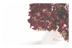 21/30: By arrangement (judi may) Tags: april2017amonthin30pictures flowers driedflowers driedhydrangeas jug dof depthoffield white whitebackground negativespace soft highkey red