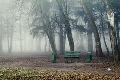 утром, в парке, был туман :-) (Alex-Bell) Tags: russia country city voronezh alexbell30 alexey belyaev place publicgarden park pew tree tourist wood россия страна город воронеж алексей беляев скамейка дерево дорожка утро природа парк прогулка пейзаж fog туман турист трава