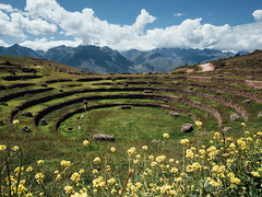 Moray y flores (Tarek Harbi) Tags: moray peru landscape nature ricoh gr gw3