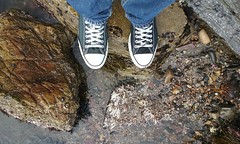 20170219_125254 (busteye) Tags: tidepools cabrillobeach beachlife cabrillobeachtidepools sanpedro california chucktaylors converse vacation sealife chucks cameraphone mygotoshoes