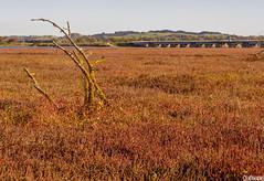 Ahuriri Estuary (smellerbee) Tags: napier roadtrip travel nz newzealand twigs branch desolate bridge empty old hawkesbay northisland ahuriri 2017