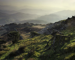 GOING BACK TO MY ROOTS (SwaloPhoto) Tags: cumbria england lakedistrict nationalpark central fells greatintake wall stone dyke roots little langdale inversion mountains grass hills fujixt1 fujinon xf18135mm f3556 rlmoiswr