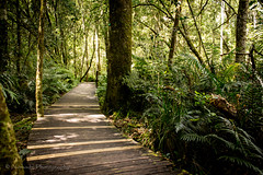 Into the jungle (nomadsnature) Tags: odpshutters instadaily instagramsa instamoment instatravel ishootwithorms lightroomedits nature photooftheday southafricathroughmyeyes beaconisland gardenofeden knysna southafrica summer westerncape exterior forest landscapephotography tree woods za