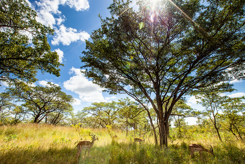 KrugerParkREIZ&HIGHRES-64