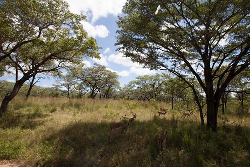 KrugerParkREIZ&HIGHRES-61