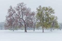 A Clash of Seasons (Pulver41) Tags: denver snow spring cheesmanpark colorado trees landscape