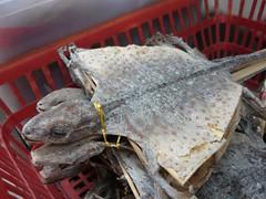 Lagartija disecada (Martincho Lema) Tags: lagartija disecada dried lizard toky gecko medicina china hongkong