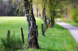 _spring green