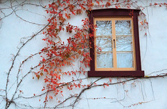 Window Treatment (michaelbackunas.zenfolio.com) Tags: welcoming quebec canada fall architecture classic growth earthy