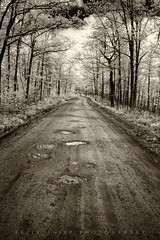 The road unexplored... (KellyShipp) Tags: road monochrome rural forest canon country monotone holes pot dirt infrared dirtroad arkansas gravel